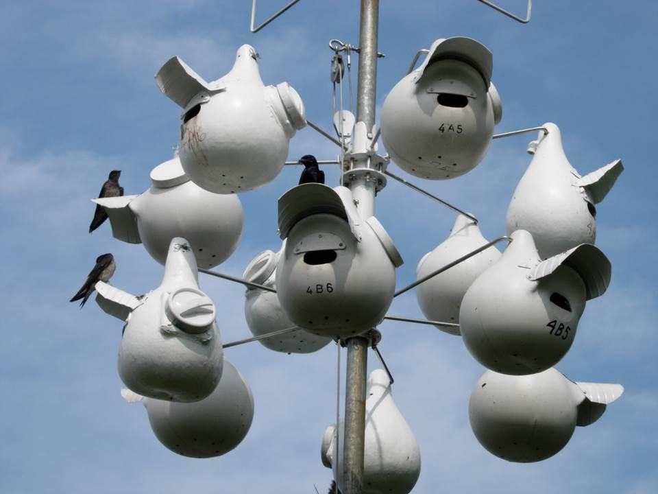 Adopt A Nest Fundraiser