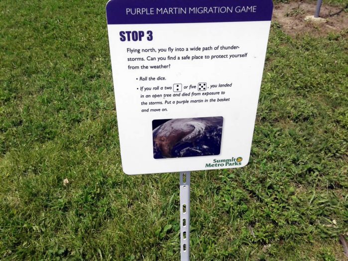 Purple Martin Obstacles 3