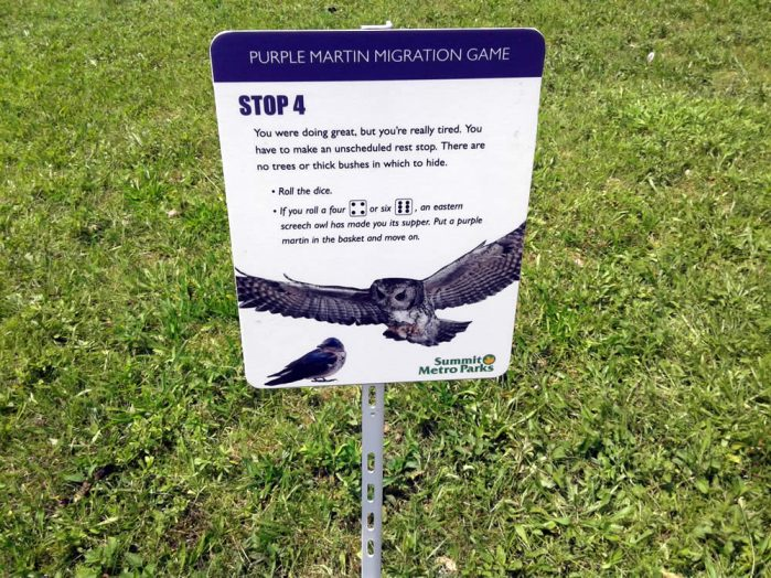 Purple Martin Obstacles 4