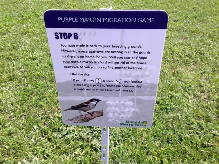 Purple Martin Obstacles 6